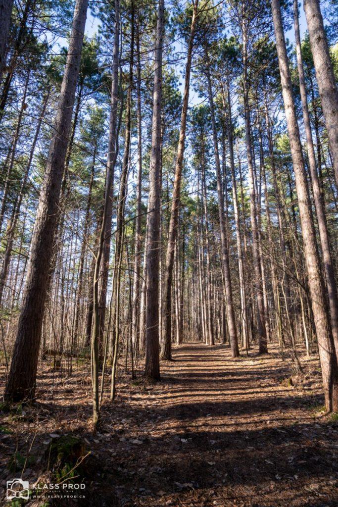 Centre de découverte de la forêt et du bois